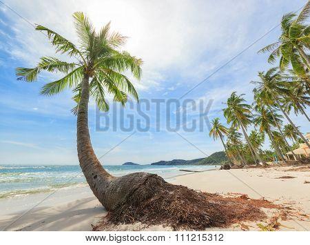 tropical beach with high palms