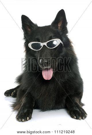 Belgian Shepherd Groenendael And Glasses