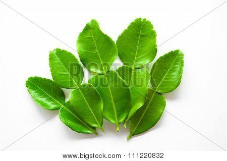 green Kaffir lime on white background