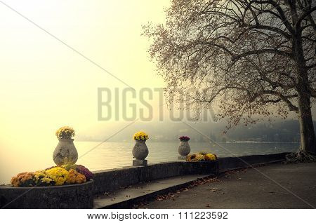 Annecy Lake And Flowers