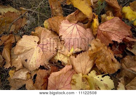 brown vine leaves
