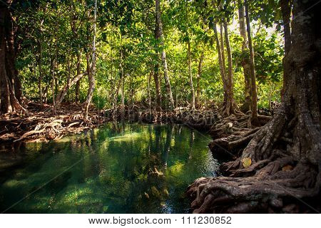 Closeup River Gleams Among Mangrove Trees Under Sunlight In Park