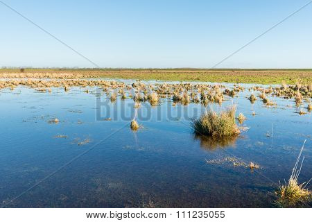 Flooded Land In A Nature Reserve