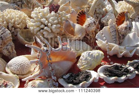 An Array of Exotic Shells and Coral