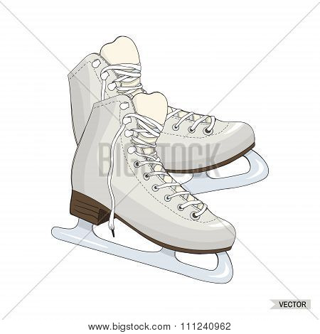 Skates Isolated On White Background.