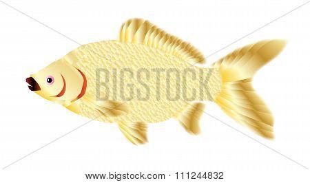 Pet Goldfish