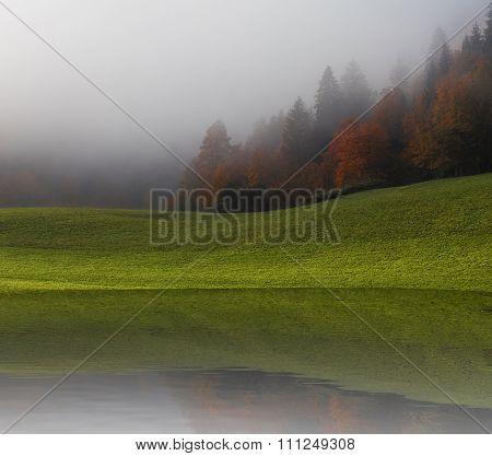 Foggy Nature