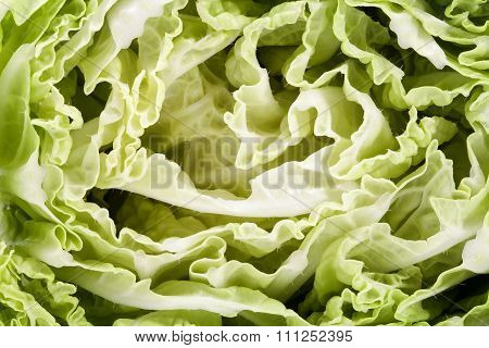 Background Of Green Middle Of Cut Napa Cabbage, Close Up