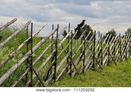 A bird on the fence. Rural landscape.