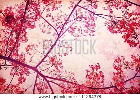 Sweet Red Color Tone Of  Flam-boyant Flower As Retro Pattern  Background