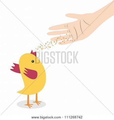 Hand Feeding Chicken