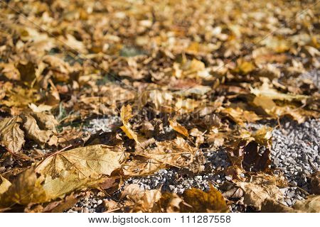 Decaying Autumn Leaves On Asphalt
