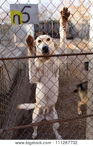Dog In Shelter
