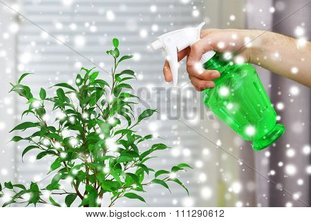 Male hand spraying flowers on white window background over snow effect