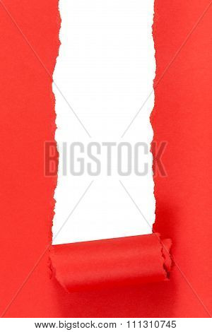 Red Rolled-up Ripped Paper On Vertical Background
