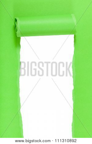 Green Rolled Ripped Paper On Vertical Background