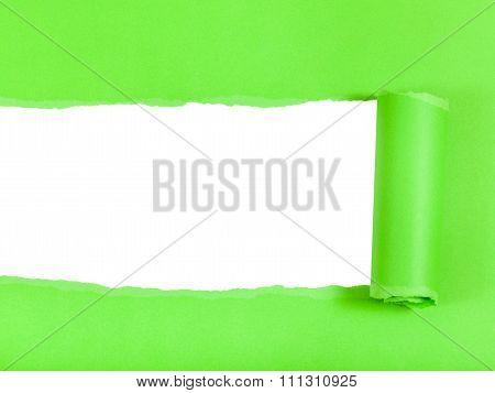 Green Rolled-up Ripped Paper On White Isolated