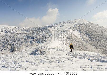 Winter White Snow Of Sobaeksan Mountain In Korea