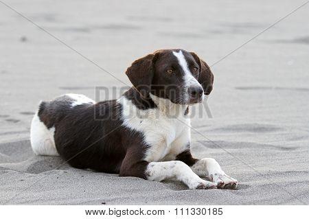 Cute stray dog on the beach