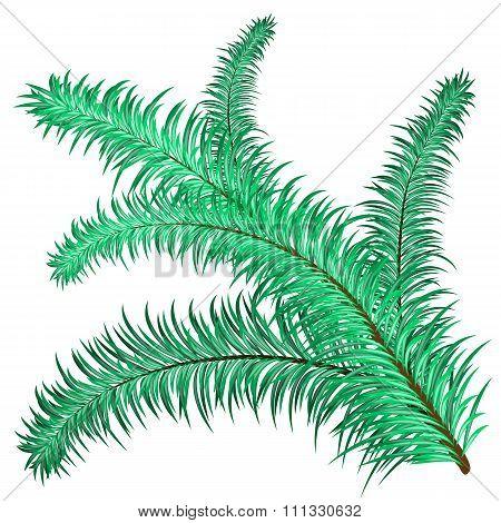 Twig of evergreen
