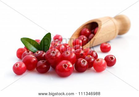 Cranberry Close-up
