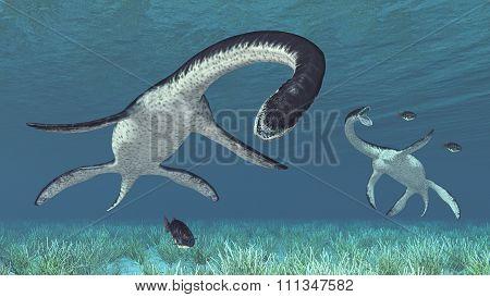 Plesiosaurus hunting