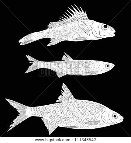 illustration with set of three freshwater fishes isolated on black background