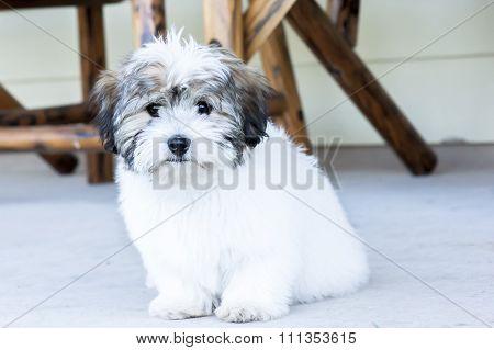 Cute white puppy dog