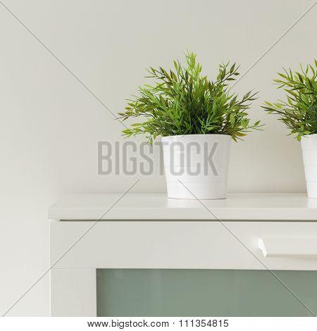 Plants In White Pots