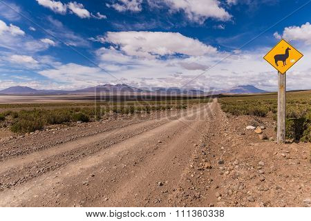 Lama Warning Sign In The Bolivian Altiplano