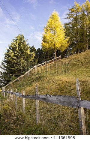 Wooden Fence Bordering Field In Alpine Forest