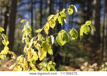 Green Leaves On Branches In Bright Sunlight