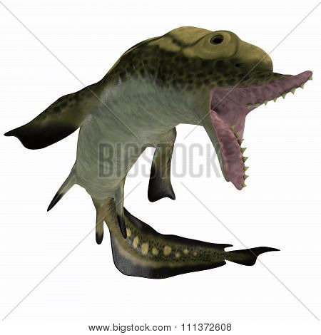 Carboniferous Edestus Shark