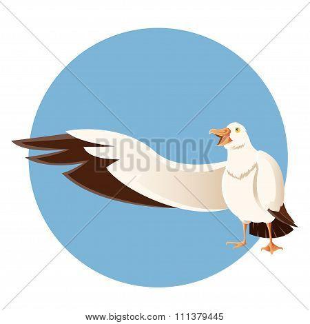 Happy Greeting Albatross