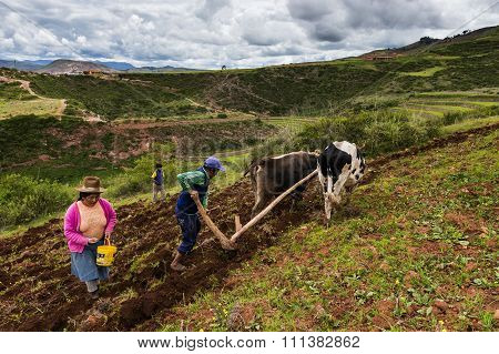 Peruvian family plowing the land in Maras, Peru