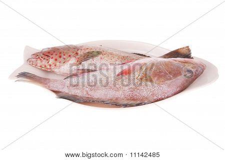 Rohe Bass auf Platte