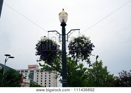 Petunias in Downtown Joliet