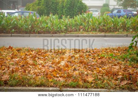 Yellow leaves by road