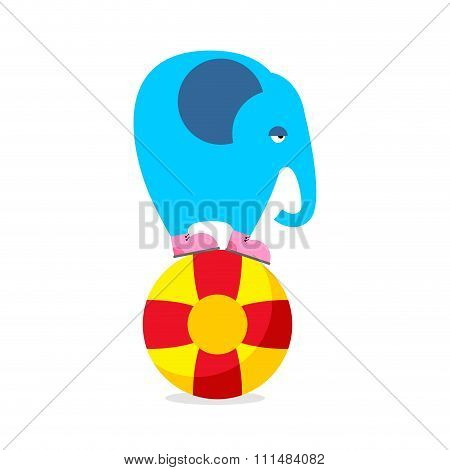 Blue Elephant On Ball. Performing Circus Animal. Sad Elephant Amuses Children Circus. Wild Beast Of