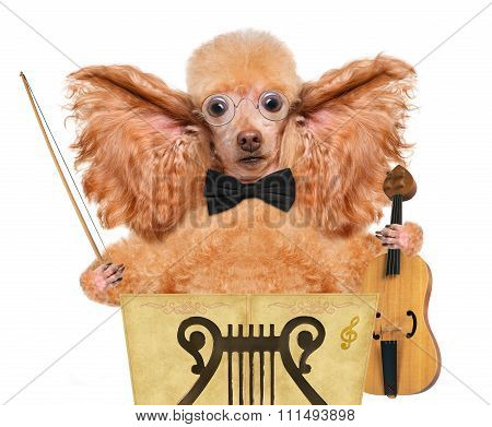 Young dog violinist