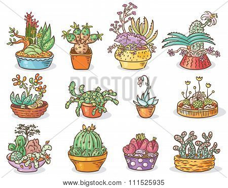 Set Of Succulent Compositions In Containers, Colorful Drawing, Isolated