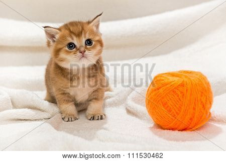 Little Kitty And A Skein Of Wool