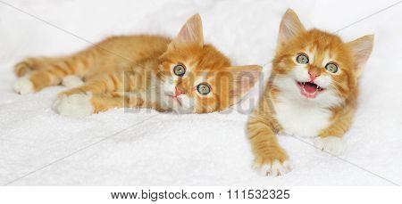 Kitten Meows