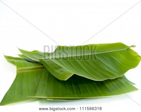 Banana Leaf ,the Leaves Of The Banana Tree.