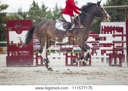 Trotting Before Overtaking The Obstacle At Horse Jumping Competition