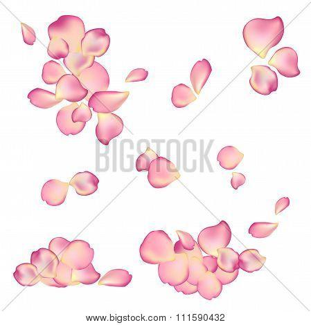 Random Rose Petals Against White Background.