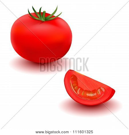Tomato. Realistic illustration.