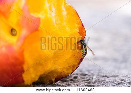 Wasp Eating Peach