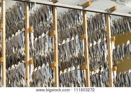 Dried Fish Detail