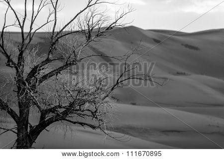 Tree Against Sand Dune